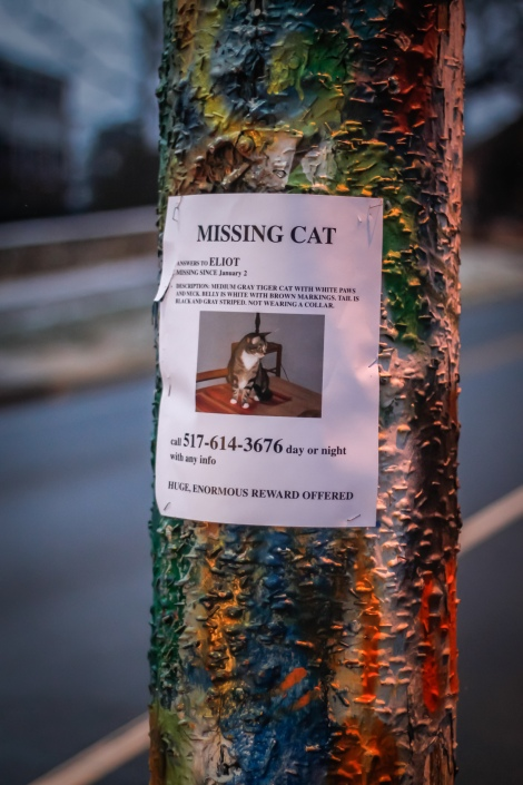 MISSING CAT  ANSWERS TO ELIOT  MISSING SINCE January 2  DESCRIPTION: MEDIUM GRAY TIGER CAT WITH WHITE PAWS AND NECK.  BELLY IS WHITE WITH BROWN MARKINGS. TAIL IS BLACK AND GRAY STRIPED.  NOT WEARING A COLLAR.  call 517-614-3676 day or night with any info  HUGE, ENORMOUS REWARD OFFERED